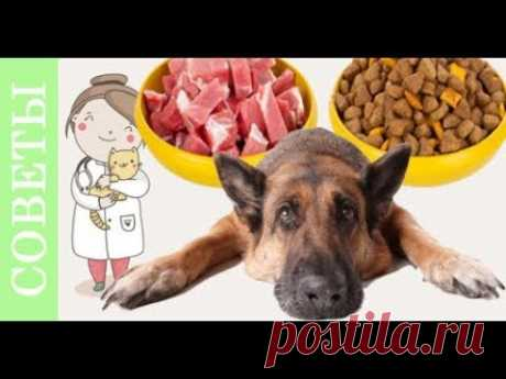 Si compruébase - correctamente das de comer al perro. Los mitos sobre el forraje de los perros