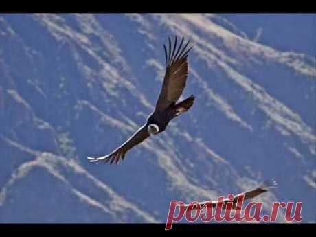EL CONDOR PASA [PAN PIPES] - YouTube