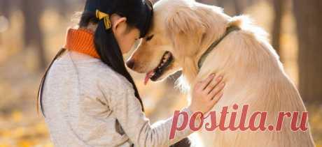 Могут ли собаки любить?   PetTips