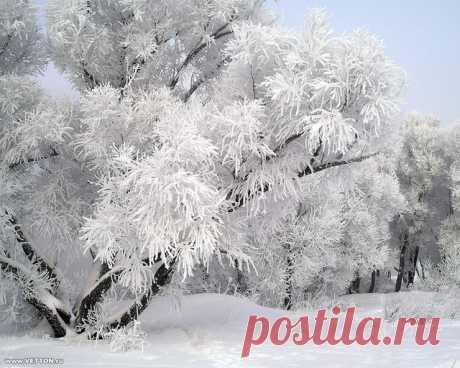 Народный календарь. 5 января -Тучин день..