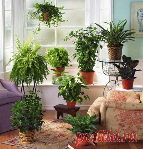 Подкармливайте комнатные растения правильно...