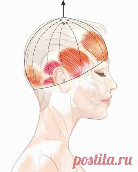 Упражнение «шлем»: эффективная подтяжка лица без скальпеля! - Домашняя аптечка - медиаплатформа МирТесен