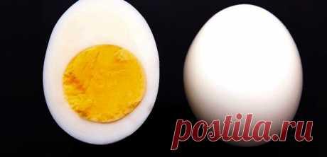 Диета «Два яйца». Снижает вес до минус 20 кг. и убирает жировые отложения в области живота | Здоровьице | Яндекс Дзен