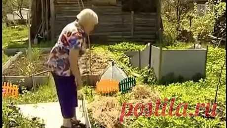 Галина Кизима - Посадка картофеля под солому