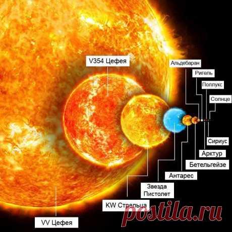 Соотношение размеров крупнейших звезд