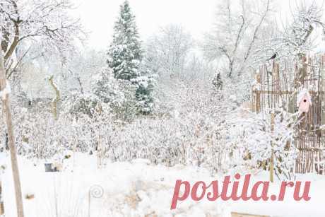Вспоминая тепло, ожидая весну, Пробужденья зеленого скорого, Не забудьте про зимнего снега красу, Не забудьте, зима - это здорово!