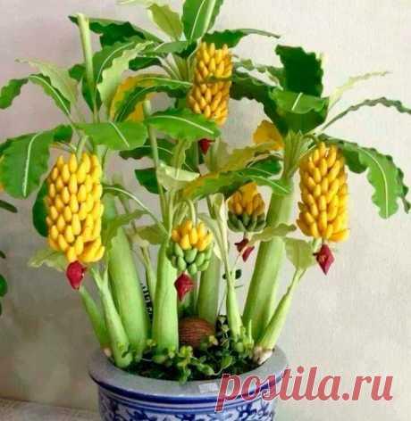 Банан: посадка и уход в домашних условиях, выращивание из семян