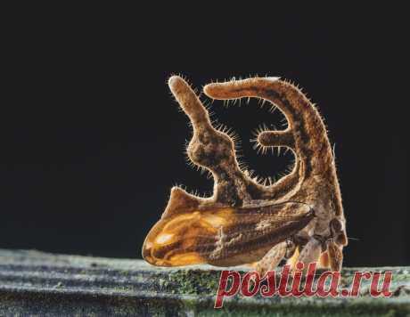 Бразильская горбатка: Шизофренические формы южных насекомых. Зачем им макет солнечной системы на голове? | Книга животных | Яндекс Дзен