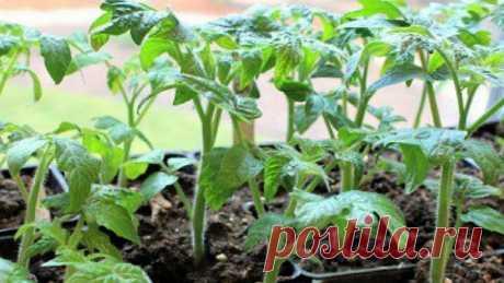 Универсальная подкормка для огородных культур | Энциклопедия домовладельца