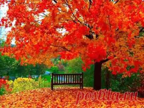 А.Розенбаум- Пусть Осень не кончается (Голуби)