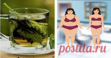 Принимайте эту смесь перед сном и устраните все жиры из вашего организма - Хитрости Жизни - медиаплатформа МирТесен