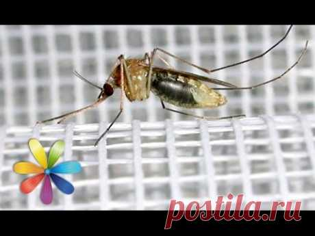 Делаем москитную сетку на окна и защиту от мух - Все буде добре - Выпуск 619 - 17.06.15