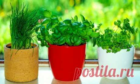 8 herbs and spices which are easy for growing up in kitchen.