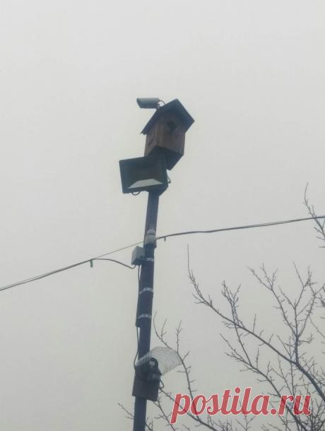 Скворечники и домики для птиц | | Для тех, кто любит работать с деревом