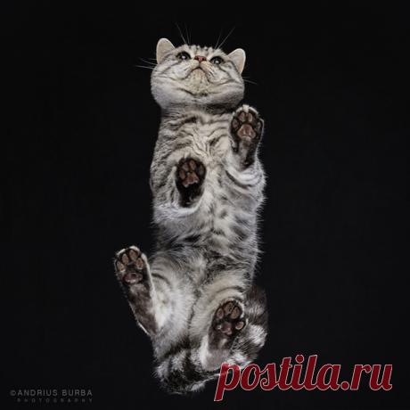Фотографии кошек снятых в необычном ракурсе