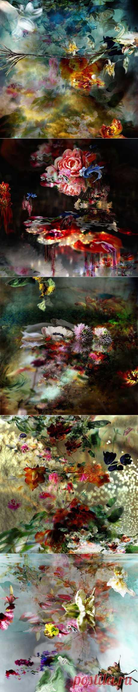 Выразительные фотографии цветов от бельгийской художницы   Фотография   Фотография