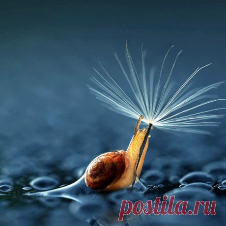 Los caracoles no lento. Aprecian simplemente la vida.