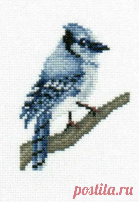 Blue Jay counted cross-stitch chart   Etsy