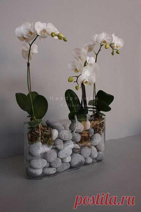 Красивые композиции из орхидей в миксованной посадке — Мир интересного