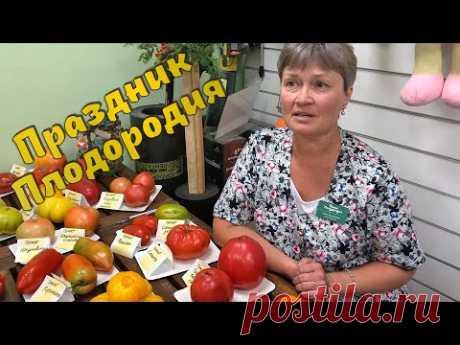 Урожайные томаты в любую погоду