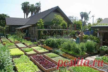 Особенности нового закона о садовых и огороднических товариществах - 2019 год