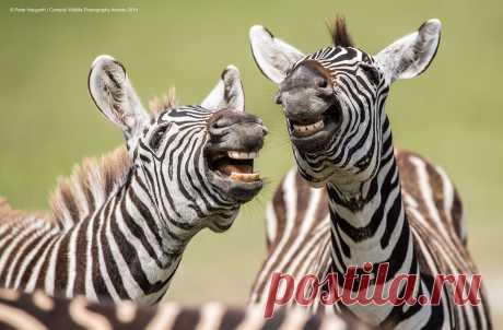 Самые смешные фото дикой природы: названы 40 финалистов конкурса