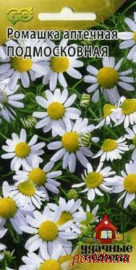 """Семена. Ромашка аптечная """"Подмосковная"""" (вес: 0,2 г) Всхожесть: 58%. Однолетнее лекарственное растение. Стебель прямостоячий, сильноветвистый, высотой 30-60 см. Листья длиной 2-5 см, двояко-перисторассеченные на узкие нитевидные дольки, очередные, сидячие. Цветки собраны в корзинки на длинных цветоносах, расположенных на концах побегов..."""