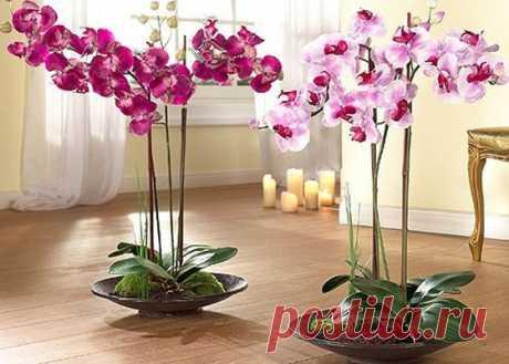 Орхидея - уход круглый год... | Моя усадьба | Яндекс Дзен