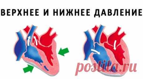 Разница между верхним и нижним давлением – все, что нужно знать - ПолонСил.ру - социальная сеть здоровья - медиаплатформа МирТесен
