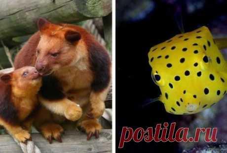 Фото редких животных, доказывающих, что природе ещё есть, чем нас удивить