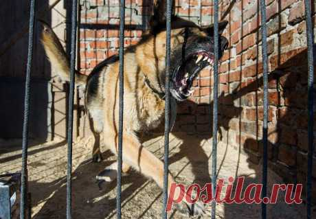 Вести.Ru: В МВД составили список опасных пород собак