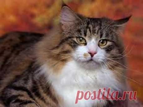 Народные поверья окотах Коты являются спутниками человека напротяжении многих веков, иимприписывают множество мистических свойств. Наблюдения заэтими грациозными животными стали причиной множества народных поверий.