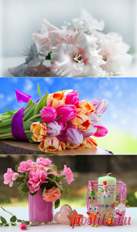 Flowers: pictures