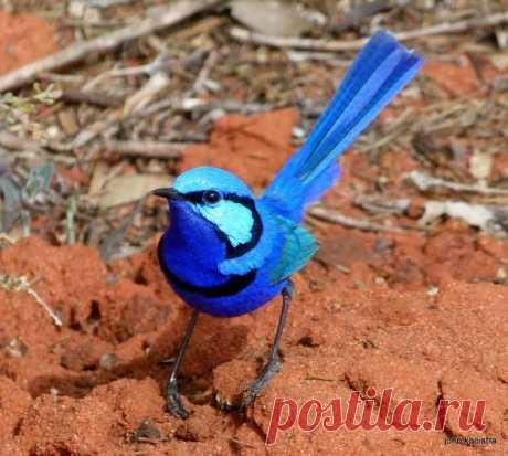 Самые необычные птицы