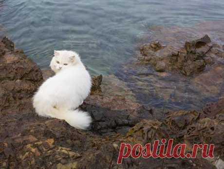 20 любопытных фактов о кошкахмои любимые кошечки