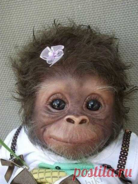 Baby monkey | в мире животных