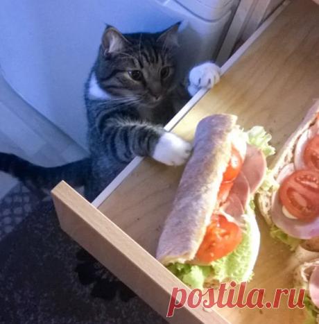 Чем может заниматься ушлый кот на кухне, особенно если его никто не видит (+смешные фото) | Лариса Кречетова | Яндекс Дзен
