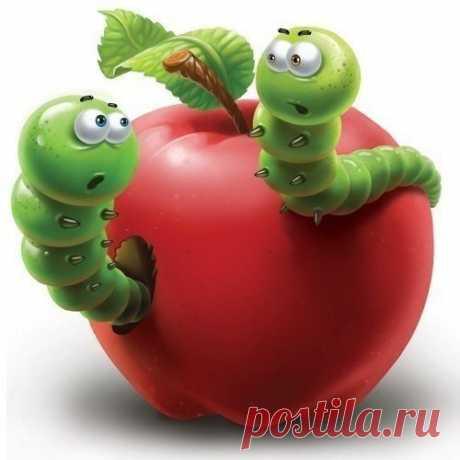 Если сплетни донимают, огорчаться нет нужды. Знайте — черви выбирают только лучшие плоды!