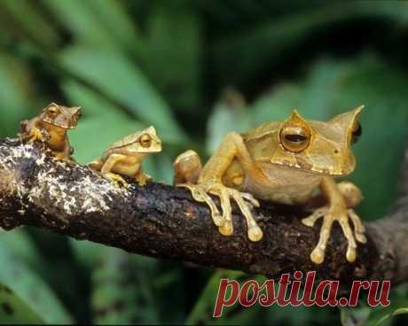Семейные портреты животных, которые покажут вам, что такое фотогеничность