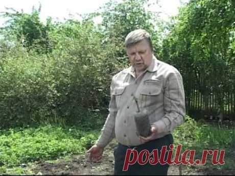 Технология выращивания винограда - Николай Сергеев 2