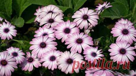 Неприхотдивые цветы для дачи. Посадил, и забыл... Вторая 10-ка) | Блог садовода | Яндекс Дзен
