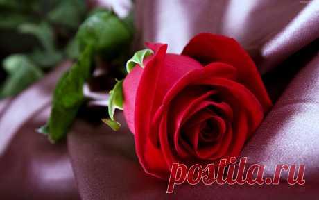 129330_czerwona_roza.jpg (3840×2400)