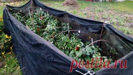 «Тоннель» из плёнки — настоящая находка для выращивания перцев. Мой способ переняли все знакомые   Маленький сад на краю Вселенной   Яндекс Дзен