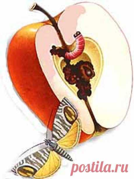 НАСТОЙ ИЗ ЧИЛИ-ПРОТИВ ПЛОДОЖОРОК   1 перчинку чили мелко нарежьте,залейте 1л.воды.кипятите час. Дайте настояться сутки,добавьте 5л.воды и процедите через ситечко. И опрыскайте яблоньки этим перечным раствором. И вы сможите собрать отменный урожай яблок.