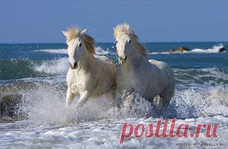 Красивые лошади (56 фото)