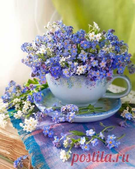 ...Есть такие цветы, люди есть - Незабудки:    Те, которых вовек невозможно Забыть... Ничего в них особого нету, как будто… С ними     Просто всё время...Рядом...Хочется Быть...