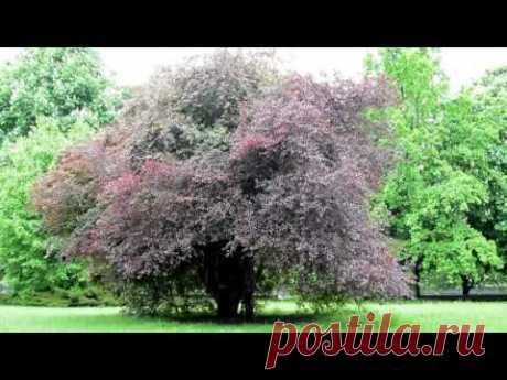 Дерево под дождем #футаж - YouTube