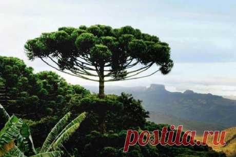Самые красивые и необычные леса мира Когда-то могучие леса покрывали половину всей планеты. Сейчас в их владении только небольшая часть Земли, и как нечто прекрасное человек уже давно их не воспринимает. Лес – лишь скучные деревья, подумает типичный горожанин...