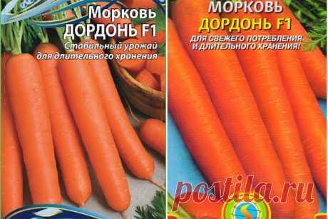 Морковь Дордонь F1: отзывы, фото, описание сорта, характеристика, достоинства и недостатки, особенности выращивания, урожайность