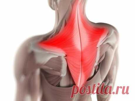 Мышечные зажимы шеи и спины: снятие боли изменением позы » MAKATAKA